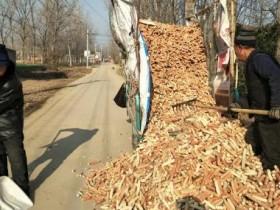 农村暴利赚钱项目,收购玉米芯一年能赚30多万