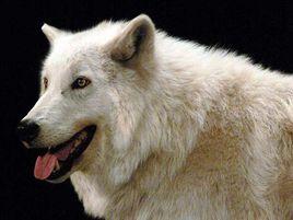 找项目没思路?看看3个空手套白狼的小思路核心内幕揭秘