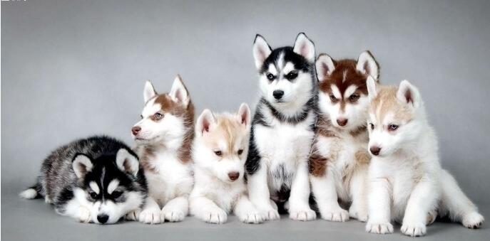 极其小众偏门的宠物聚会项目,操作者已经赚到10万+