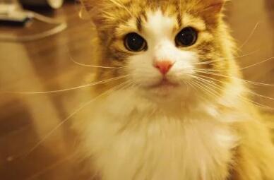 利润高不起眼的偏门生意,养猫养出一门年赚数十万?