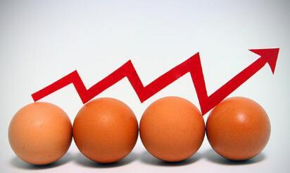 今年养鸡行情到2020年会持续暴利?