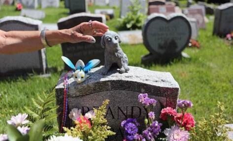 宠物殡葬利润高不起眼的新起偏门暴利行业